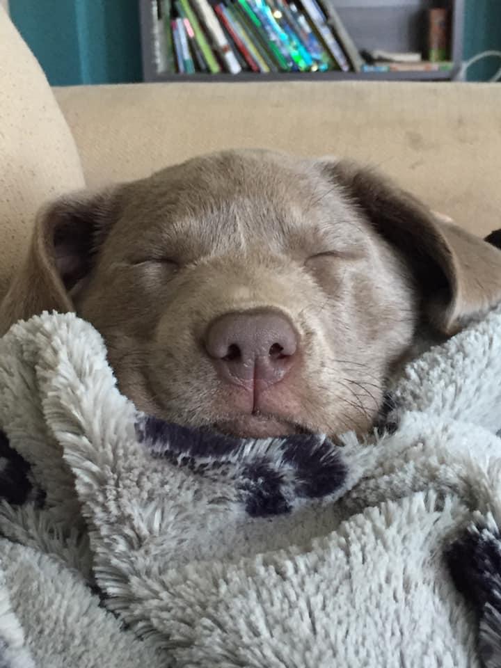 MaisreeSleeping